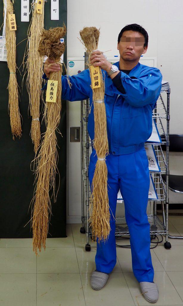 Shuzo-koteki-mai